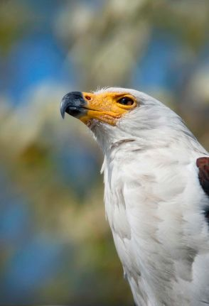 birding04
