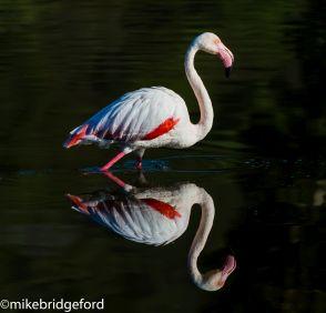 birding06