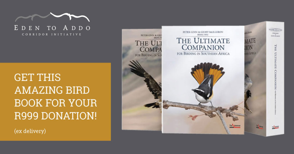 eden to addo Ultimate companion book special