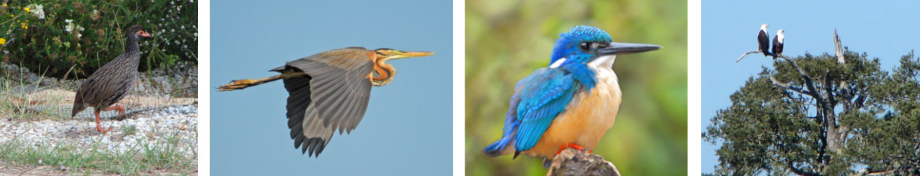 bottom-images-birding