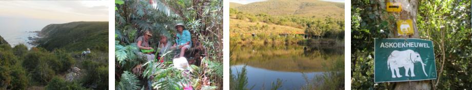 bottom-images-trails