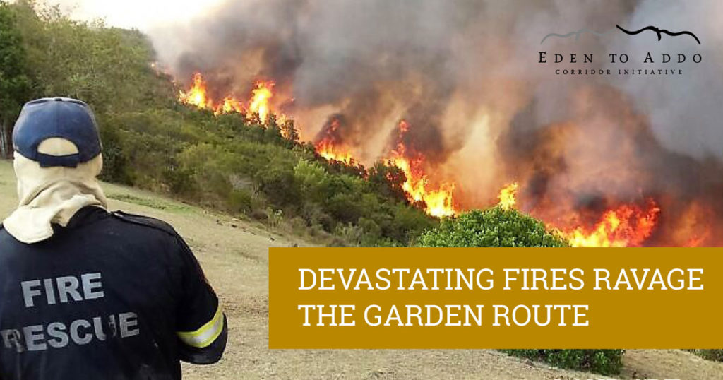 Fires, Eden to Addo and Nature's Valley Trust